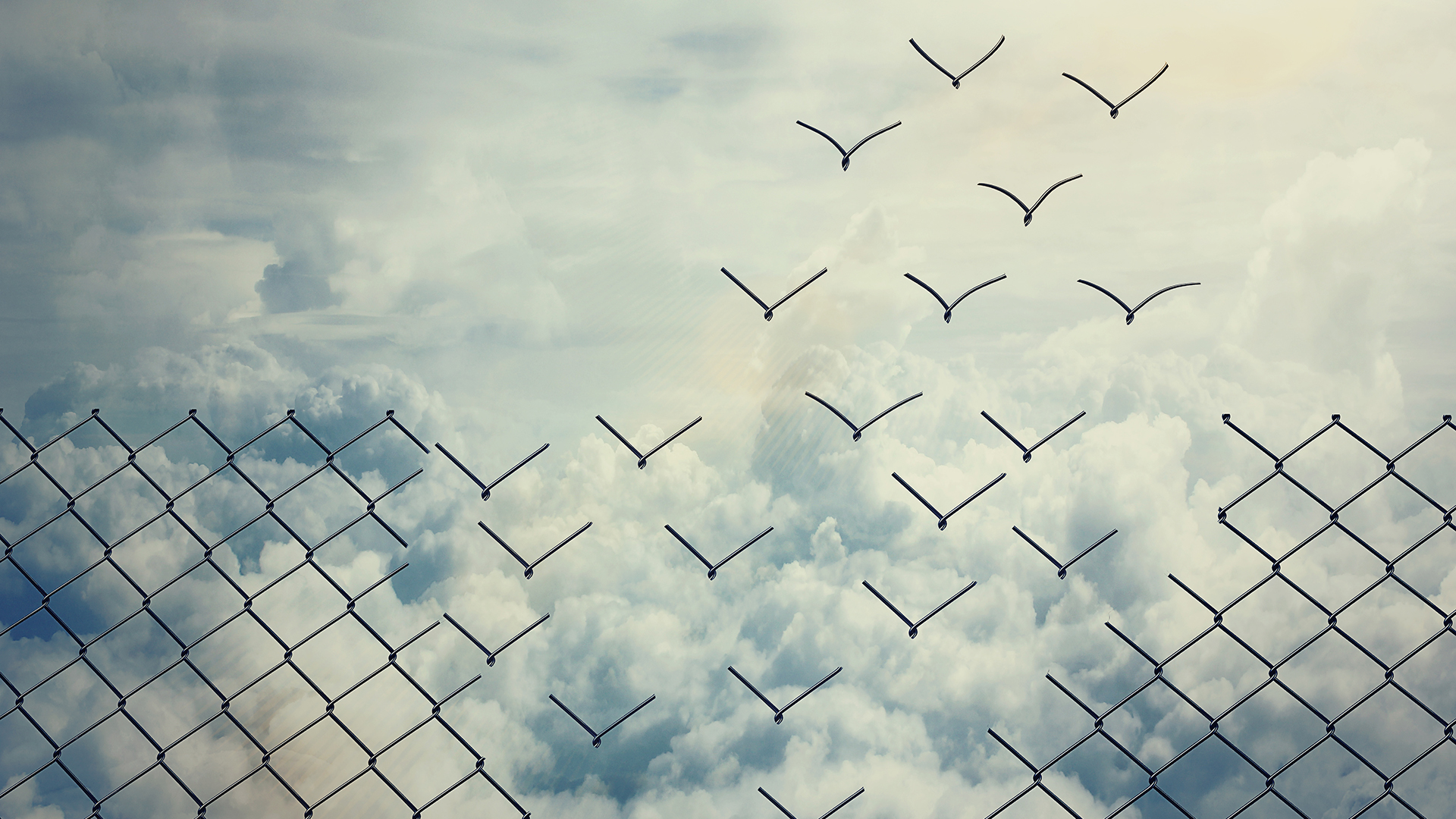 Change_wire_fence_to_birds